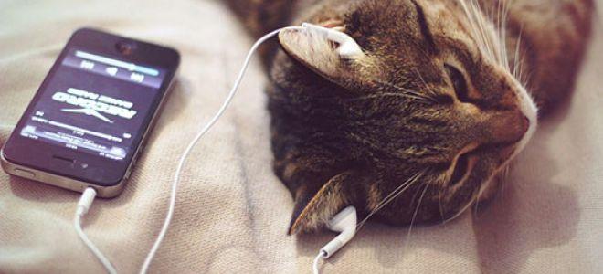 Подборка приложений для загрузки музыки на айфон